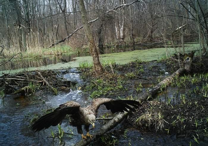 chernobyl-wildlife-camera-traps (2)