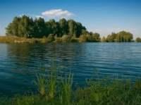 дубровский лес (2)