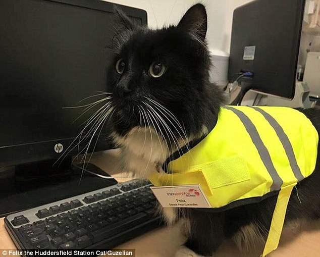 Кот официально устроился на работу (Фоторепортаж)