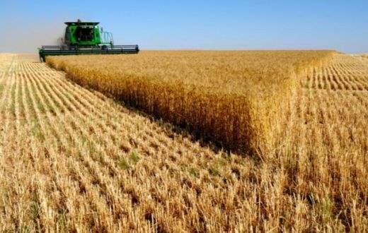 Россия опережает США и Канаду по экспорту пшеницы
