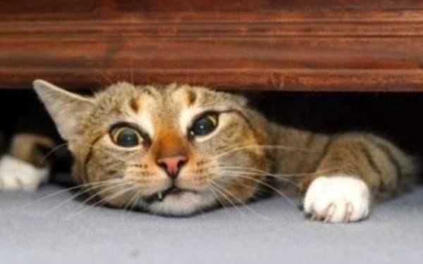 США описали синдром подмены кота