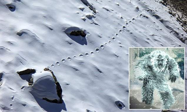 В Бутане найдены следы Йети (Снежного человека)
