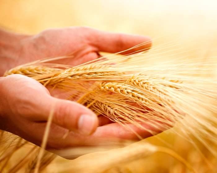 Стоит ли страховать урожай ?