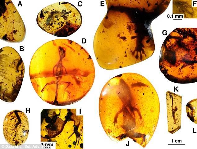 В Мьянме в янтаре нашли древних ящериц
