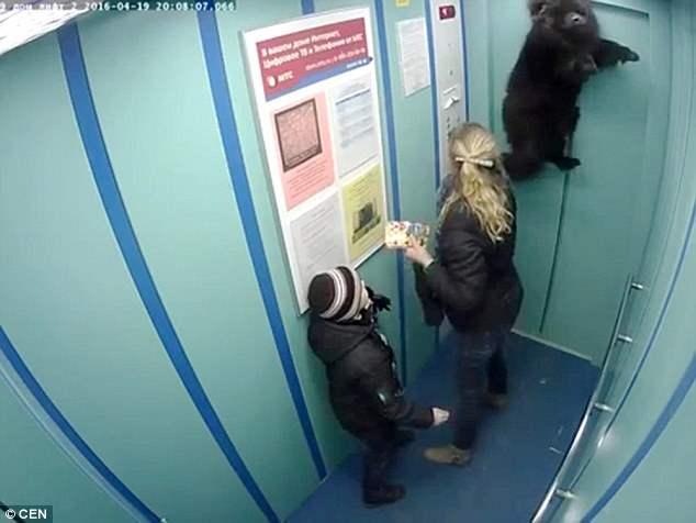Собаку подвесило в лифте Питера ! Шок (Видео)
