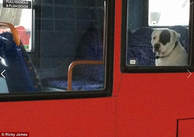 собака автобус (2)