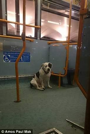 собака автобус (3)