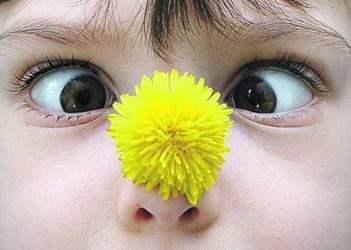 Аллергия на цветения