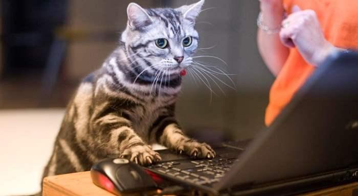 Смотреть онлайн или скачать через торрент ?
