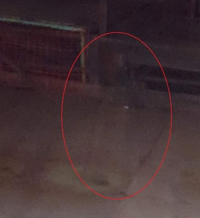 чистом месте фантомы на фото как выглядит калининградской