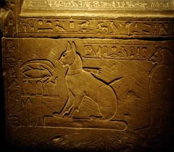 egipet-koty