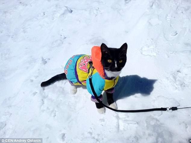 Андрей пристегнул кота, чтобы тот не пытался убежать