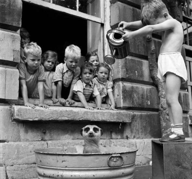 Дети стирают суриката, Южная Африка, 1950.