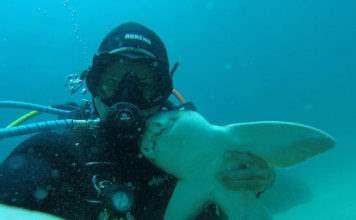 Рик Андерсон и акула