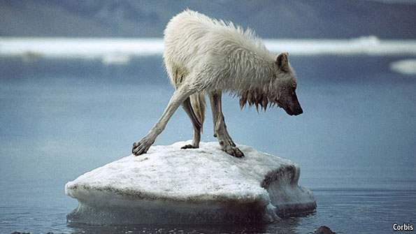 Арктика тает