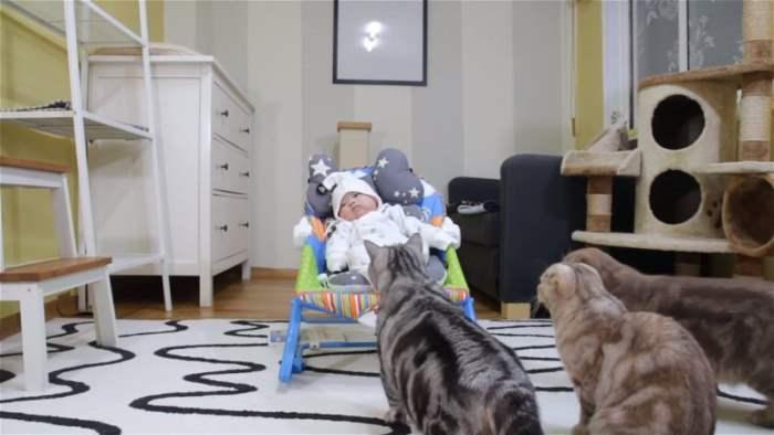 Кошки и ребенок