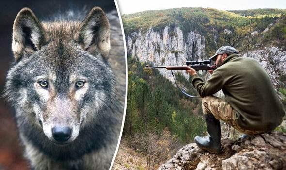Сафари на волков