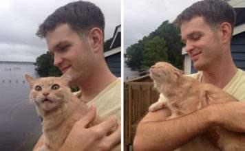 Смешные фотографии с котами