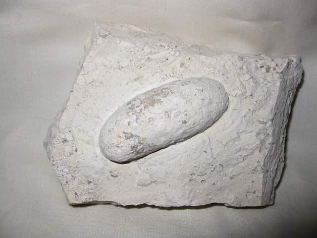 Окаменелости крокодиловых яиц