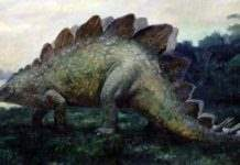 news-stegosaurus
