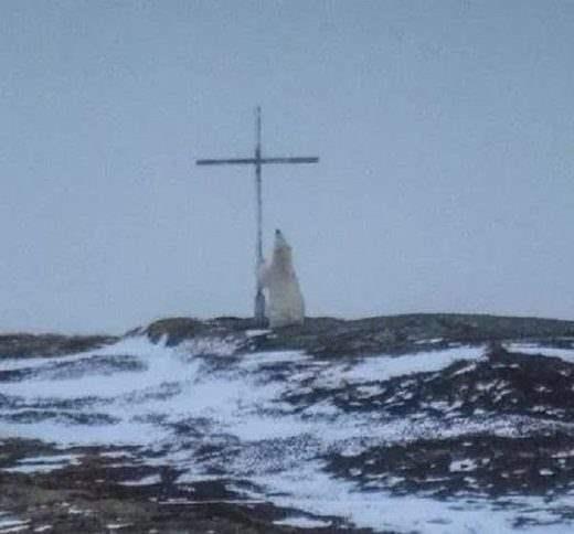 Белый медведь молитва