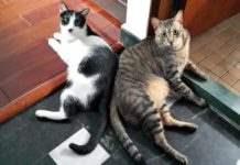 Коты Тайвань