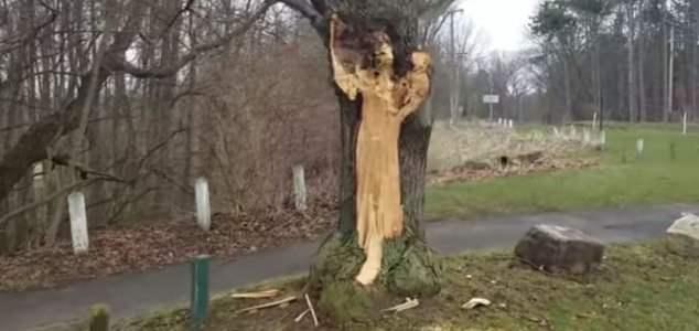 news-lady-tree