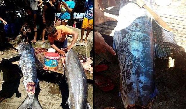 odd patterns fish philippines