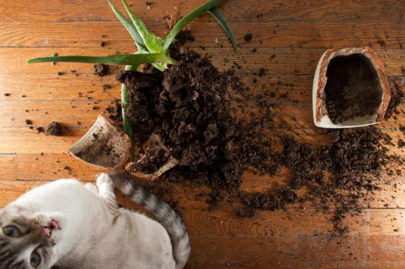 Выкорчевывание растений