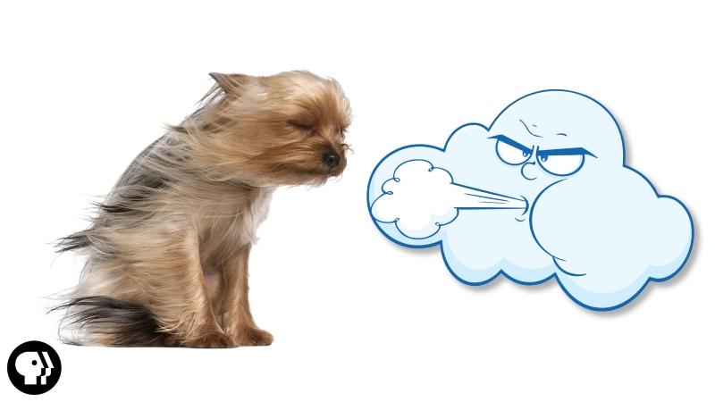 День ветра