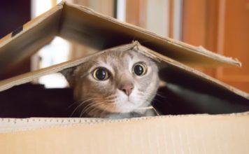 Инспектирует коробки