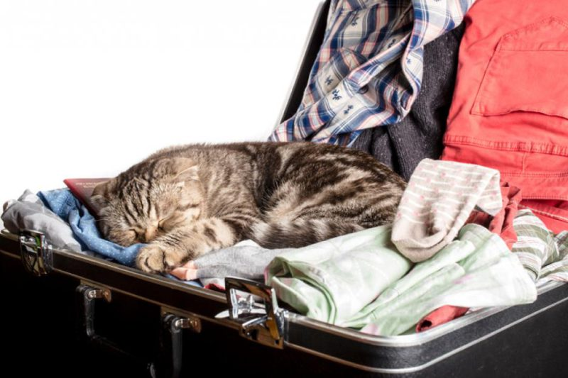 Помощь при сборе багажа