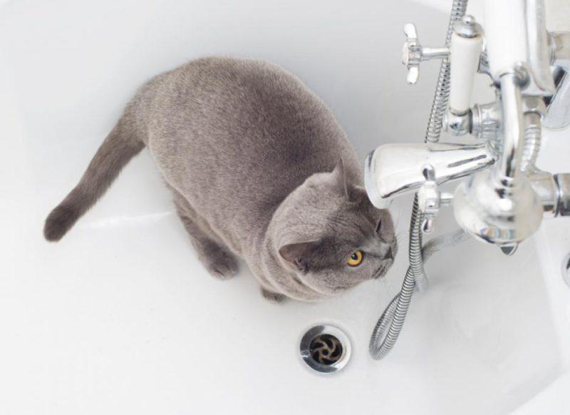 Проверка качества воды в ванне