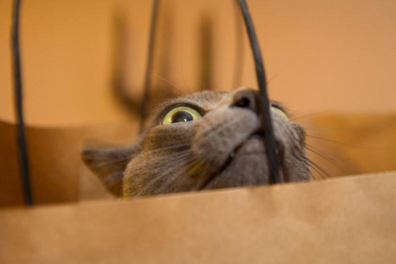 Проверка сумок
