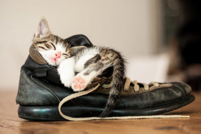 Согревание обуви зимой