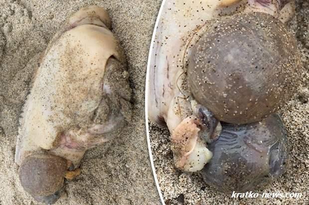 Монстр на пляже Малибу