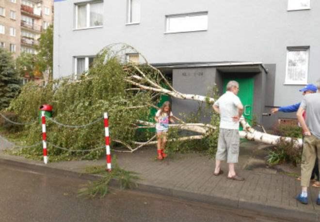 В Польше ураган повалил деревья
