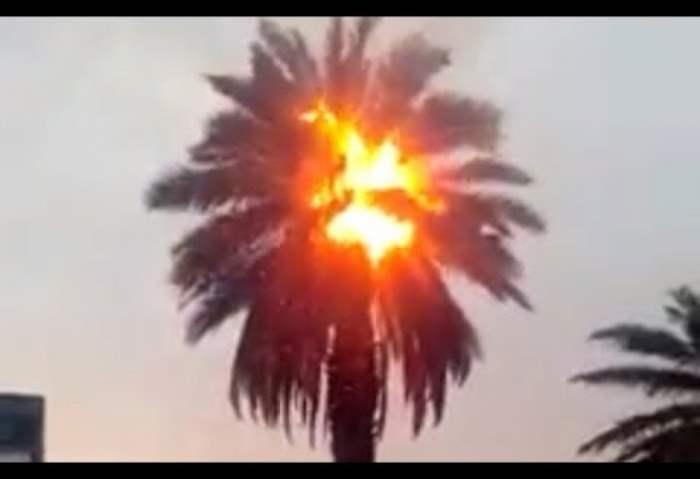 Возгораются пальмы