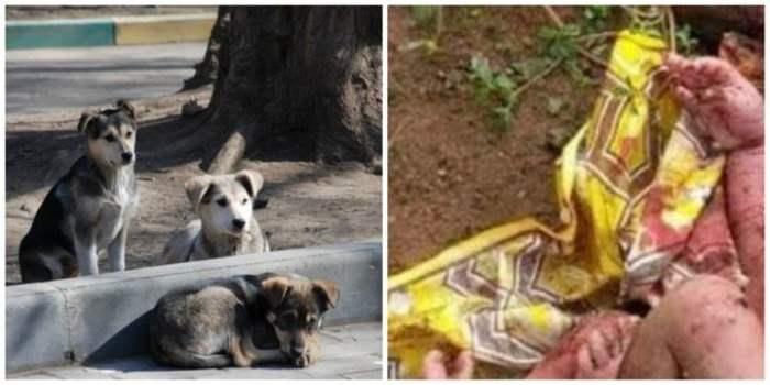 Индия собаки