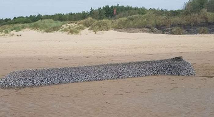 Монстр на пляже