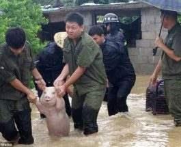 Улыбающаяся свинья