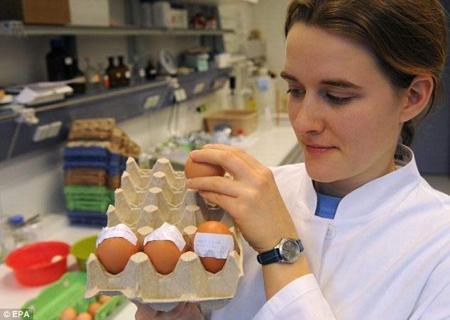 яйца в Германии