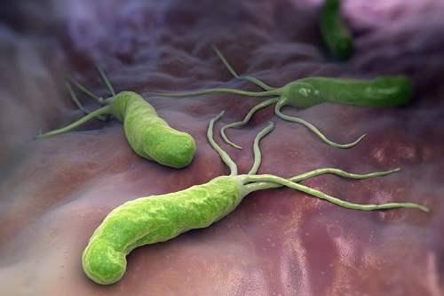 Хеликобактерия пилори