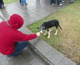 Собаки Чернобыля