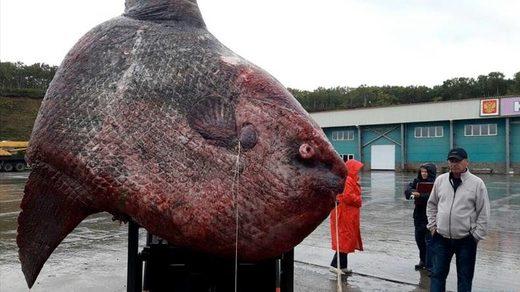 Сахалин Лунная рыба