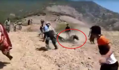 убийство медведя иран