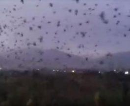 Вороны таджикистан