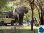 Замбия слон