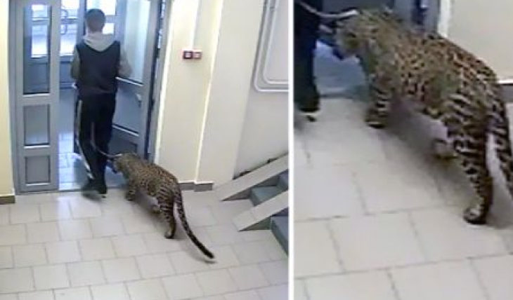 Леопард дома