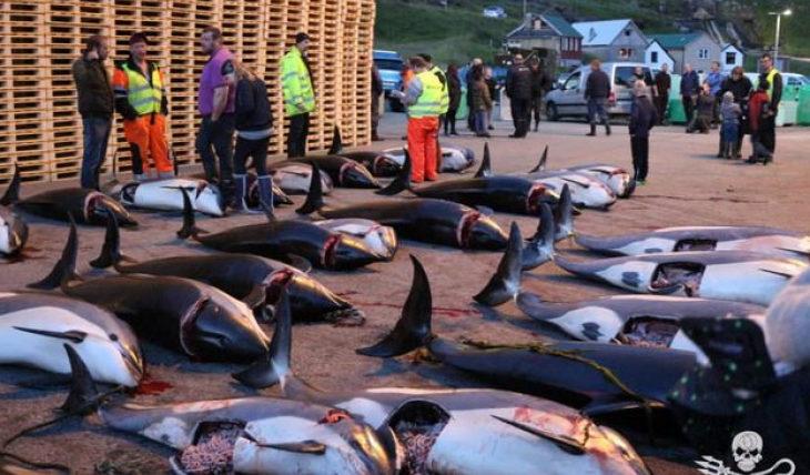 Убийство дельфинов